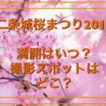 二条城桜まつりのライトアップ2018の混雑日時予想!インスタ映えする撮影スポットはどこ?
