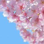 東京で子連れのお花見におすすめの場所3選!遊具やおむつ替えシートはある?